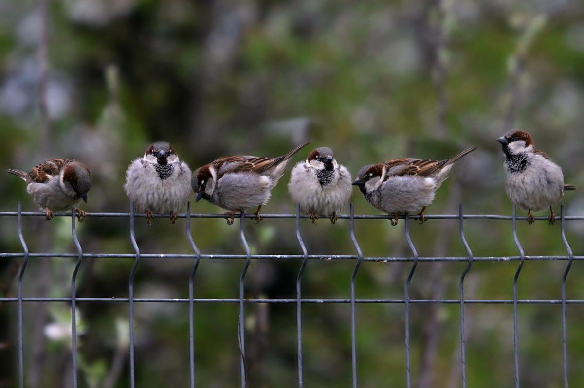 Czy ptaszki na Wyspach ćwierkają po angielsku?